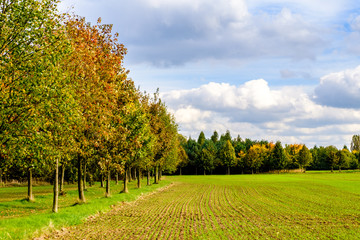 Field and trees in Autumn