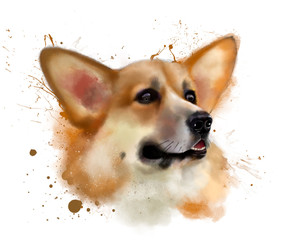 Watercolor painting dog breed, the Pembroke Welsh Corgi, with elements of the streaks and splashes of paint. Hand drawn illustration, isolated on white background