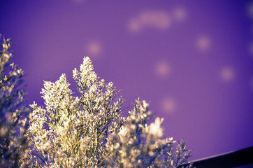 Flower blossom under purple scenic sky.