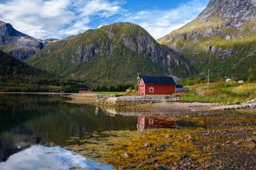 Wall Mural - Traditional red rorbu cottages at the sea on Lofoten islands in Norway