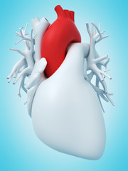 3d rendered medically accurate illustration of the aorta
