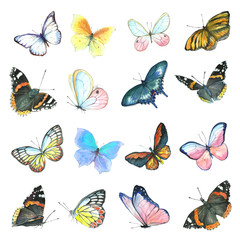 A collection of drawings of a butterfly handmade made in watercolor.