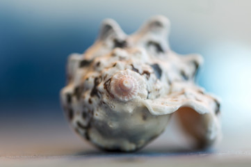 Close-up on a seashell. Shallow depth of field.