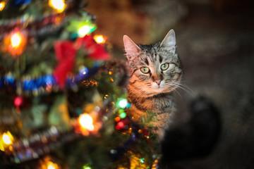 beautiful cat near the New Year tree
