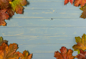 Blue wood background with autumn leaves ideal for graphic design