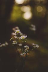 Wildflowers and Bokeh