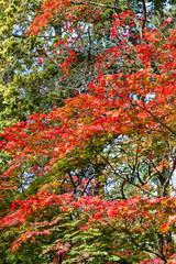 Vividly colored Autumn (fall) trees