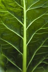Close up of leaf veins on a leaf.