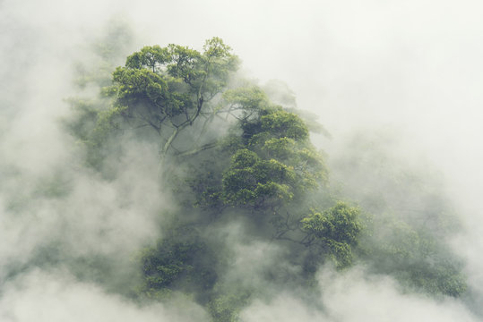 tropical forest in Japan, nature jungle with green tree and fog, concept of zin therapy  comfortable freedom relaxing for spa and yoga, eco natural sustainable conservation