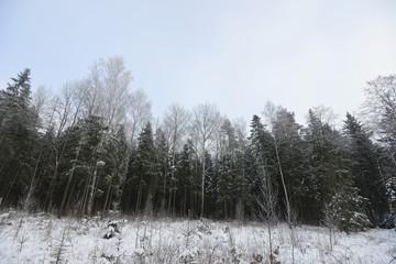 Keuken foto achterwand Bos in mist winter landscape
