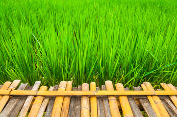 Empty wooden plank on green rice fields with fresh field background, Thailand