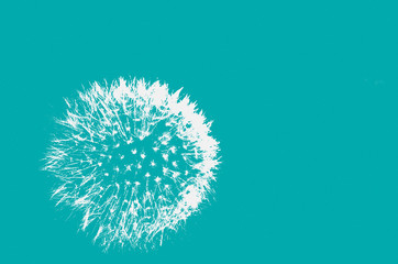 Abstract background, pattern with dandelion, minimalism