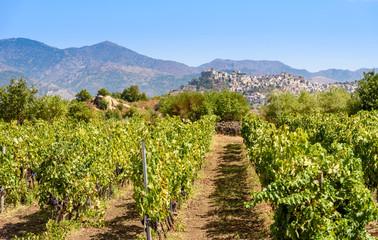 vineyard in the mount etna, sicily, italy Fototapete