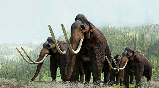 Mammut, Preistoria