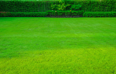 Green lawn, the front lawn for background,garden landscape design