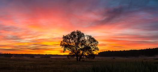 Sunrise over field and tree