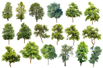 Collection Of Trees Isolated On White Background, Tropical Trees Isolated Used For Design, Advertising And Architecture.