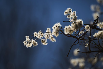 Flores en invierno