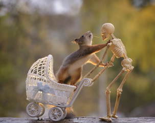 squirrel in a stroller touching a skeleton