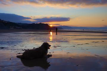 A dog on the beach at Sopelana, Bizkaia, Spain