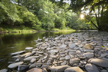 Sunbeams star over river Lune with stones foreground and green forest background England