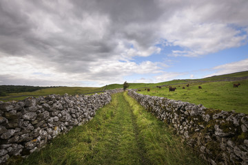 Path with limestone wall winding through green hill landscape with cattle