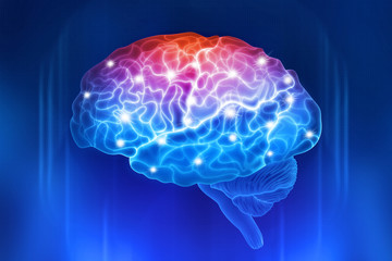 Human brain on a blue background. Active parts of the brain. Digital illustration