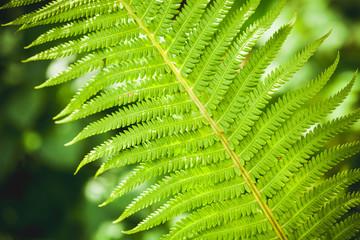 Bright green fern leaf fragment