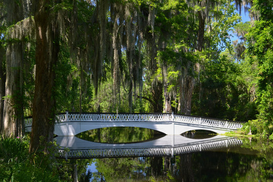 Peaceful Bridge in Southern Swamp with Spanish Moss