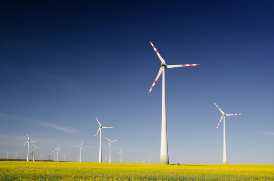 Renewable energy from rape oil biofuels and wind turbines