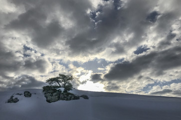 Single Tree in rocks on snow slope with dark cloud background weather