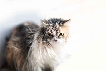 Close up of a Funny wet cat. Copyspace
