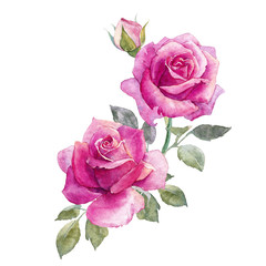 Watercolor roses composition