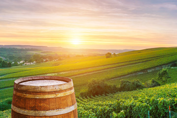 Champagne vineyards with old wooden barrel on row vine green grape in champagne vineyards background at montagne de reims, France Wall mural