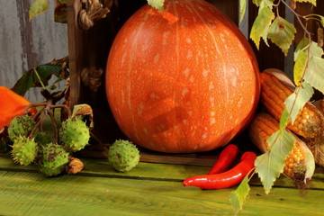 Vegetables that appear at the beginning of autumn time.