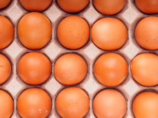 brown chicken eggs in carton