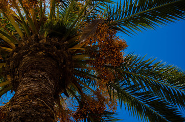 Palmenhimmel