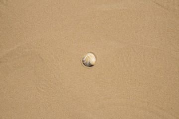 Conchiglie sulla spiaggia