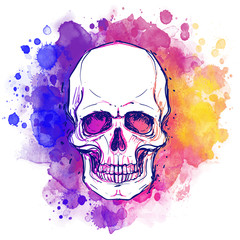 Poster Crâne aquarelle Watercolor sketchy skull with red, blue and purple colors isolated on white background. Vector illustration.
