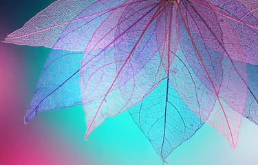 Foto op Canvas Decoratief nervenblad Macro leaves background texture blue, turquoise, pink color. Transparent skeleton leaves. Bright expressive colorful beautiful artistic image of nature.