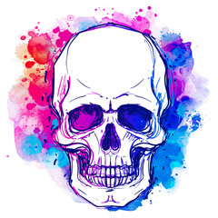 Tuinposter Aquarel schedel Watercolor sketchy skull with red, blue and purple colors isolated on white background. Vector illustration.