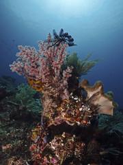 Coral in the tropical sea, Koralle im tropischen Meer