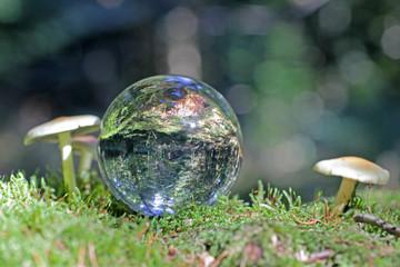 Kristallkugel im Wald mit Pilz, Schweiz