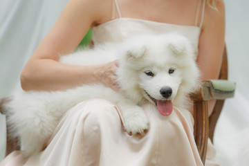white little dog with a girl