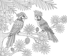 Couple of parrots sitting in the jungle on a palm tree page for adults coloring book in doodle style.
