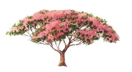 Hand painted Royal Poinciana tree