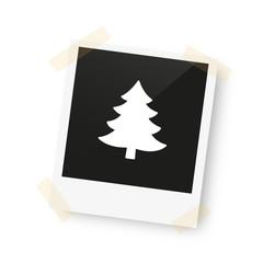 eingeklebtes Foto - Tannenbaum