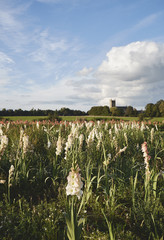 Field of mixed Gladioli flowers with a rural church beyond. Norfolk, UK.