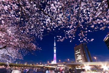 隅田公園、桜まつり、夜桜