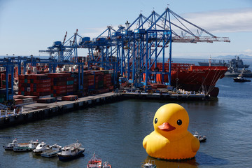 An installation of an inflatable Rubber Duck made by Dutch artist,  Florentijn Hofman, is seen in Valparaiso port
